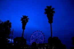 Palm Trees. Melbourne Eye, Docklands. Photo credit: Dan Wilkinson (Hot & Delicious Group).