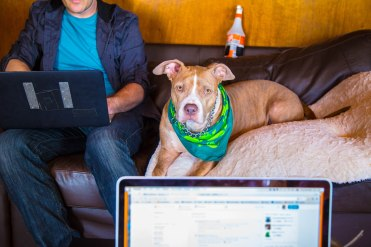 Honey Bear the pitbull not impressed with podcasting, but likes dark chocolate. LA podcast with Troy Conrad - creator of The Setlist TV Show.Photos by Dan Wilkinson (Hot & Delicious: Rocks The Planet). info@hotndelicious.comhttps://hotndelicious.com/
