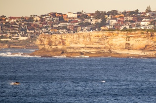 Dolphin action at sunrise by @hotndelicious. Shot from Ben Buckler, Sydney, Australia. Prints available on request. info@hotndelicious.com