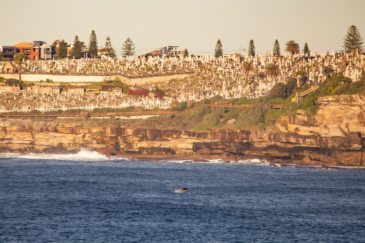 """5 more minutes"". Dolphin action at sunrise by @hotndelicious. Bondi Beach, Sydney, Australia."