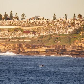 """5 more minutes"". Dolphin action at sunrise by @hotndelicious. Bondi Beach, Sydney, Australia."