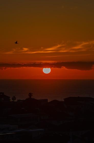 sunrise fireball lorikeet 📷✨ @hotndelicious Prints available upon request. info@hotndelicious.com