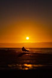 Willy Wagtail calling. Tamarama sunrise by @hotndelicious