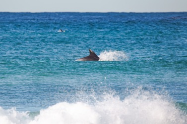 Fluro Friday dolphin 210820 by @hotndelicious