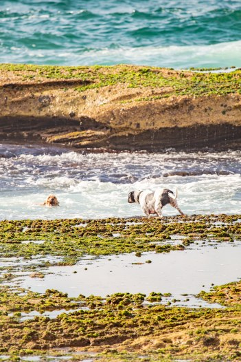 Mackenzies Bay Doggos | @BondiPupperazzi Photoshoot Oct 12
