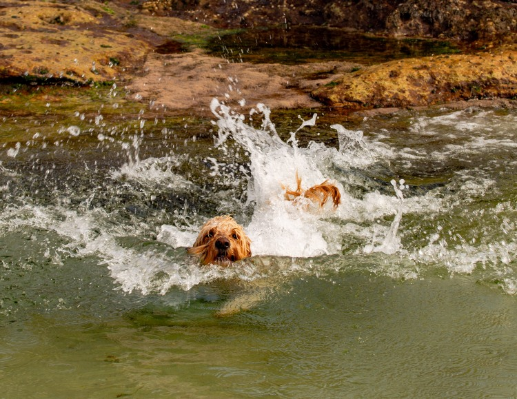 Mackenzies Bay Doggos | @BondiPupperazzi Photo Diary Oct 12