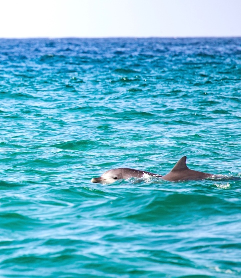 Mackenzies Bay sunrise dolphins by @hotndelicious. Sydney, Australia