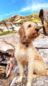 Mackenzies Bay Doggos | @BondiPupperazzi Photoshoot
