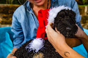 Bondi Pupperazzi Xmas Photo Shoots - For more information contact: info@bondipupperazzi.com